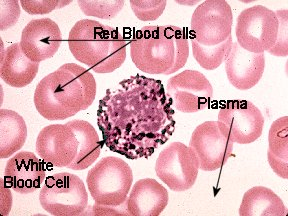 Blood Tissue