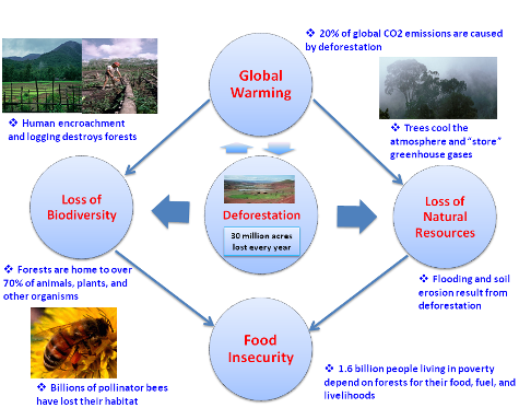 Deforestation, Climate Change, and Food Insecurity